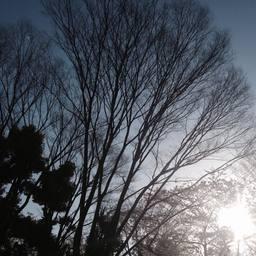 gri_tokyo_sakura.jpg